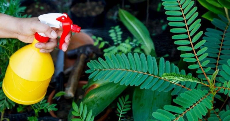 Eco-Friendly Pest Control Methods